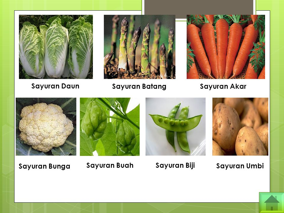 Sayuran Daun Sayuran Batang Sayuran Akar Sayuran Bunga Sayuran BuahSayuran Biji Sayuran Umbi