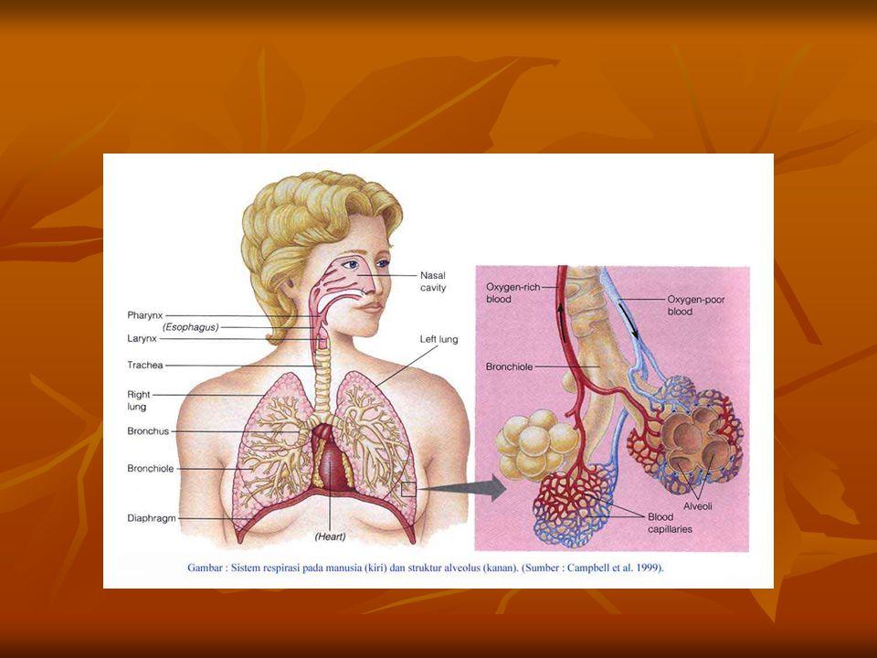- Jenis pernapasan : Tachipnea : Paru / jantung ada gangguan Tachipnea : Paru / jantung ada gangguan Bradipnea: keracunan balbiturat, uremia, koma diabetis, proses dalam otak Bradipnea: keracunan balbiturat, uremia, koma diabetis, proses dalam otak Cheyne stokes: keracunan obat bius penyakit jantung, paru, ginjal, perdrahan SSP.