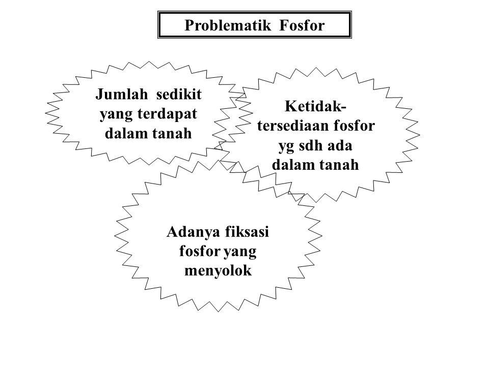 FOSFAT TANAH diabstraksikan oleh: Soemarno tanahfpub 2009 Bahan kajian MK. D.I.T.