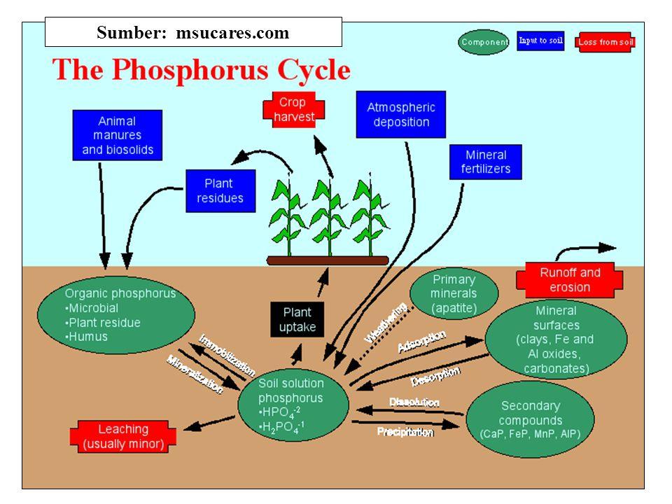 Pengelolaan P - Tanah Pengendalian P-tersedia dalam tanah: 1.