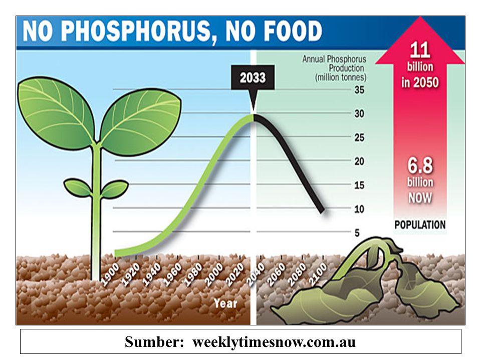 Hasil biomasa, % 100 80 60 40 20 0 115 230 460 Pemupukan P (ppm P) Sumber: Mendez-Lay (1974), Tnh Oxisol. Tingkat kritis Tdk dipakur pH= 4.8 Dikapur h