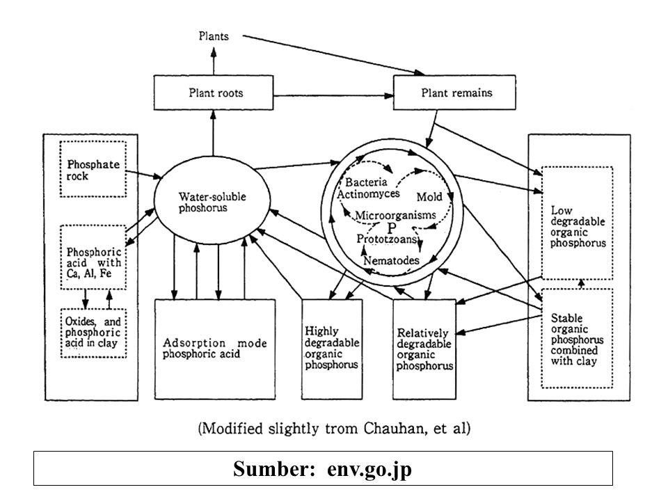 Siklus Lambat P-anorganik Siklus Cepat P-anorganik & Organik Siklus Lambat P-Organik P-mineral primer (HCl-Pi) P-mineral sekunder (NaOH-Pi) (P-residu) P-terfiksasi (Sonic-Pi) (P-residu) P- larutan tanah P- dalam tanaman & jasad tanah P-terlarut labil (Resin-P) P-terfiksasi labil (Bikarbonat-Po) P-terlarut agak labil (P-terfiksasi) (Bikarbonat-Pi) P-terfiksasi agak labil (NaOH-Po) P-organik terfiksasi secara kimia dan fisika (Sonic-Po) (Residu-Po) Sumber: Siklus Transformasi P-tanah (Hedley et al.