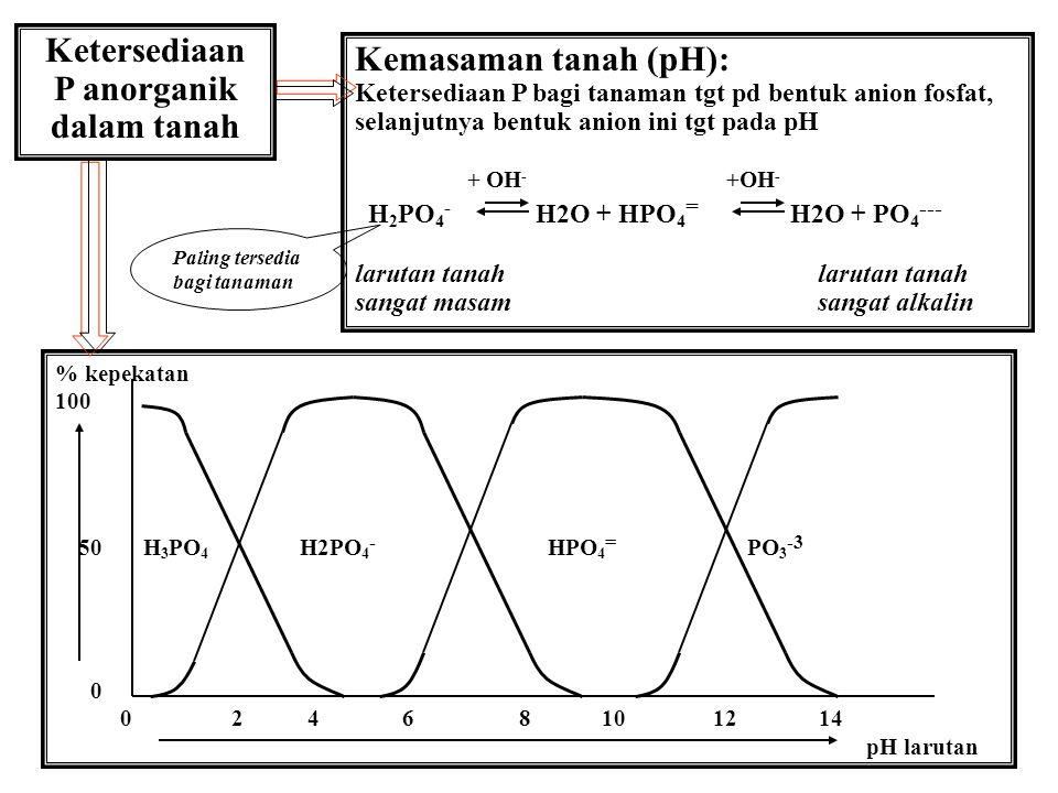 Ketersediaan P anorganik dalam tanah Kemasaman tanah (pH): Ketersediaan P bagi tanaman tgt pd bentuk anion fosfat, selanjutnya bentuk anion ini tgt pada pH + OH - +OH - H 2 PO 4 - H2O + HPO 4 = H2O + PO 4 --- larutan tanah sangat masam sangat alkalin % kepekatan 100 50 H 3 PO 4 H2PO 4 - HPO 4 = PO 3 -3 0 0 2 4 6 8 10 12 14 pH larutan Paling tersedia bagi tanaman