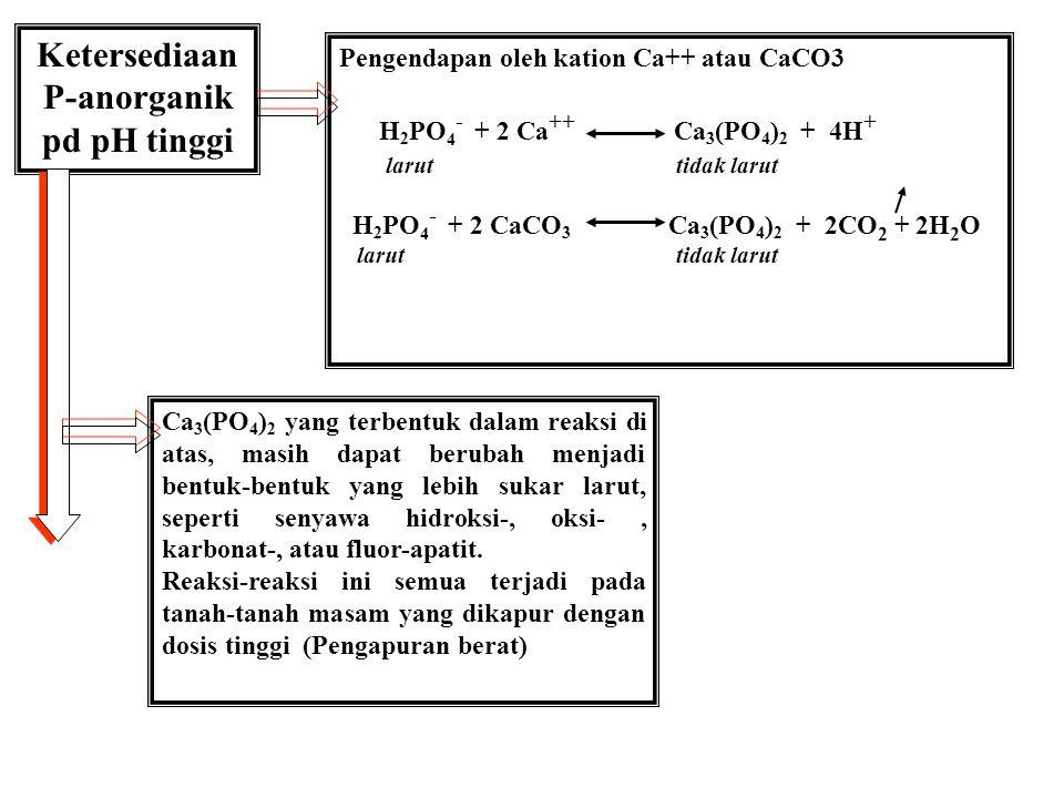 1.H 2 PO 4 - dlm larutan tanah < 10 ppm, dlm tanaman 2000 ppm 2.