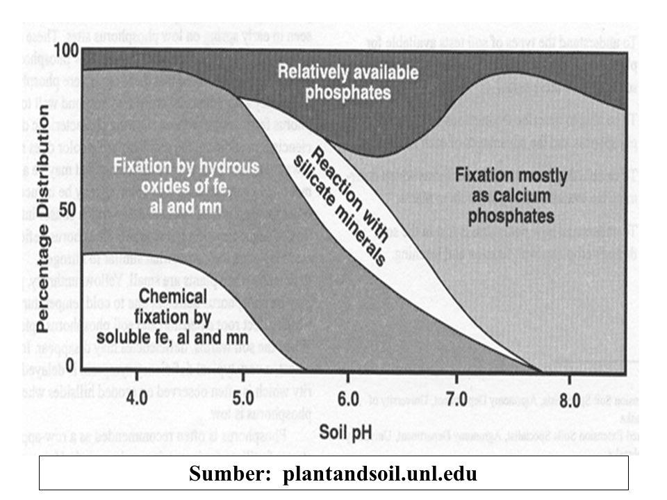 Ketersediaan P-anorganik pd pH tinggi Pengendapan oleh kation Ca++ atau CaCO3 H 2 PO 4 - + 2 Ca ++ Ca 3 (PO 4 ) 2 + 4H + larut tidak larut H 2 PO 4 -