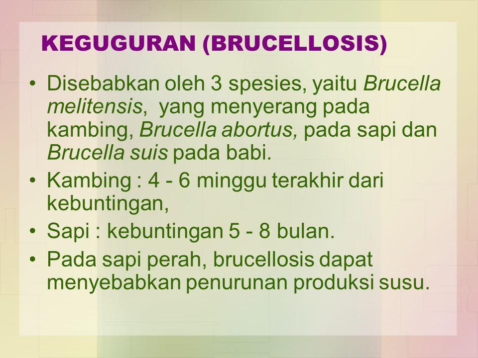 KEGUGURAN (BRUCELLOSIS) Disebabkan oleh 3 spesies, yaitu Brucella melitensis, yang menyerang pada kambing, Brucella abortus, pada sapi dan Brucella su
