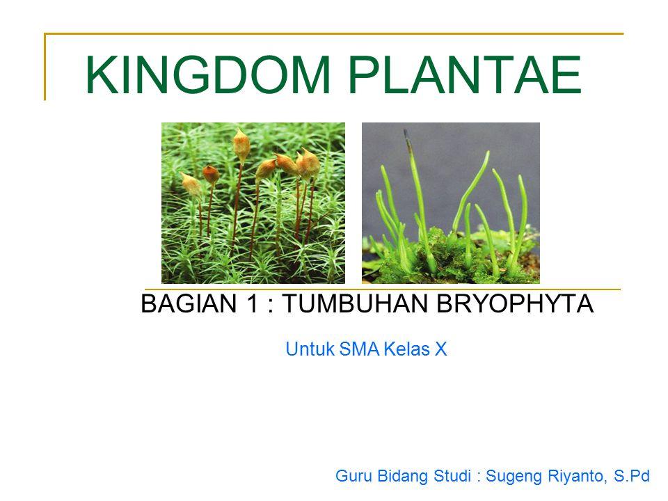 Untuk SMA Kelas X KINGDOM PLANTAE BAGIAN 1 : TUMBUHAN BRYOPHYTA Guru Bidang Studi : Sugeng Riyanto, S.Pd