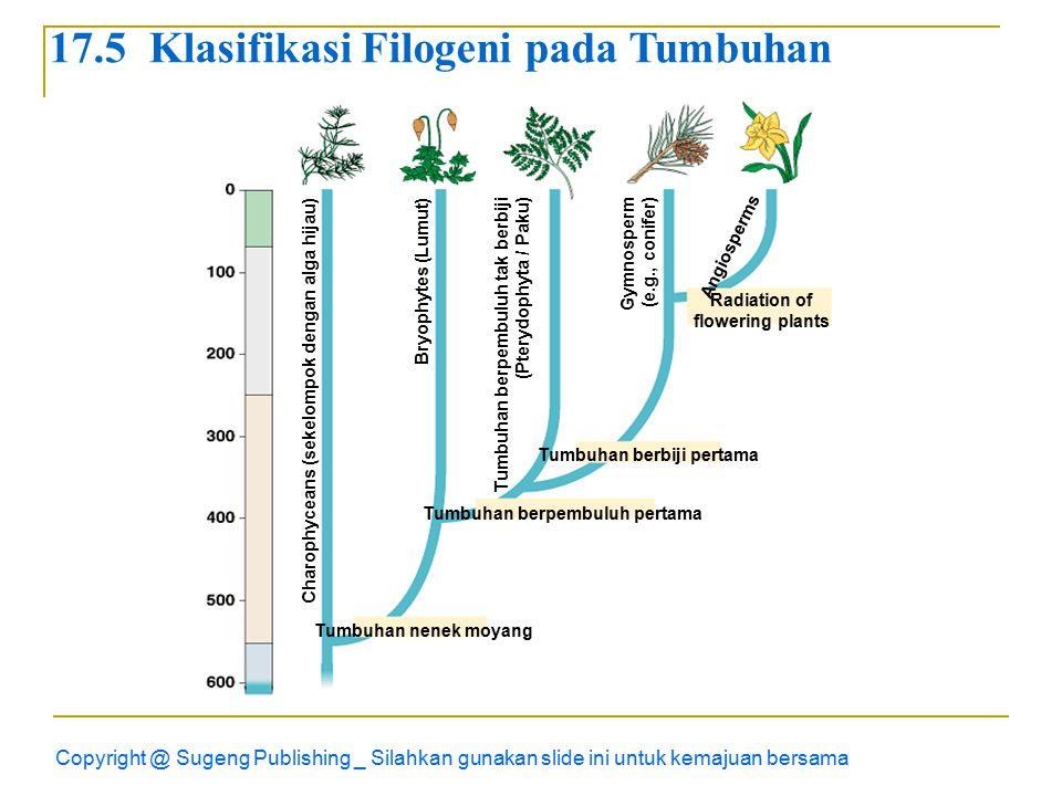Copyright @ Sugeng Publishing _ Silahkan gunakan slide ini untuk kemajuan bersama Radiation of flowering plants Charophyceans (sekelompok dengan alga hijau) Bryophytes (Lumut) Tumbuhan berpembuluh tak berbiji (Pterydophyta / Paku) Gymnosperm (e.g., conifer) Angiosperms Tumbuhan berbiji pertama Tumbuhan berpembuluh pertama Tumbuhan nenek moyang 17.5 Klasifikasi Filogeni pada Tumbuhan