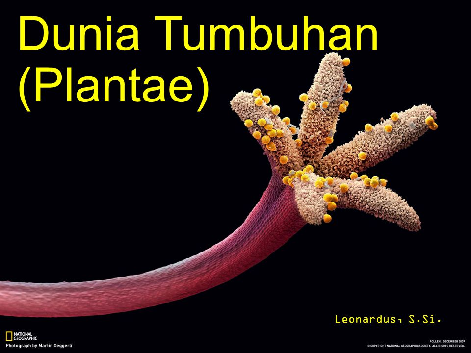Dunia Tumbuhan (Plantae) Leonardus, S.Si.