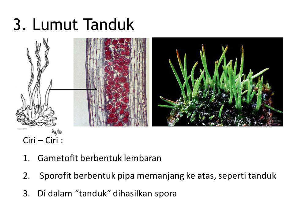 Caliptra Polytricum