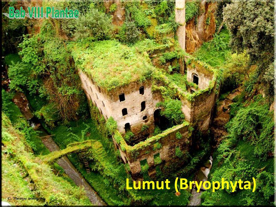 KLASIFIKASI TUMBUHAN Tumbuhan non Tracheophyta (tak berpembuluh) – Lumut (Bryophyta) Tumbuhan Tracheophyta (berpembuluh) – Paku-pakuan (Pteridophyta)