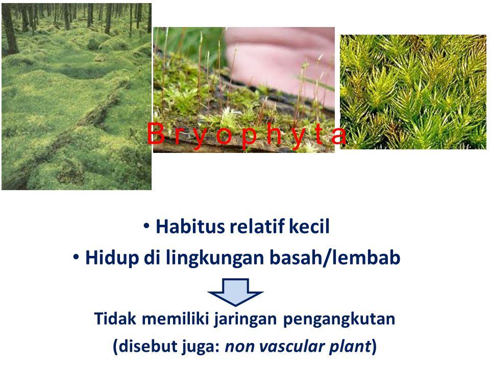 Tidak memiliki jaringan pengangkutan (disebut juga: non vascular plant) Habitus relatif kecil Hidup di lingkungan basah/lembab B r y o p h y t a