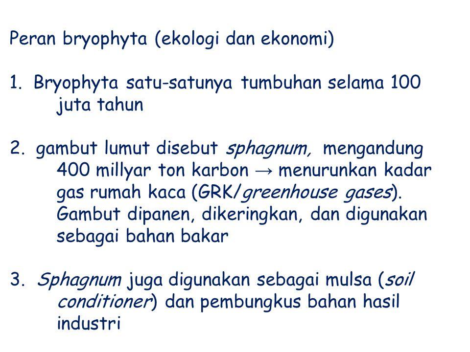 Peran bryophyta (ekologi dan ekonomi) 1. Bryophyta satu-satunya tumbuhan selama 100 juta tahun 2. gambut lumut disebut sphagnum, mengandung 400 millya
