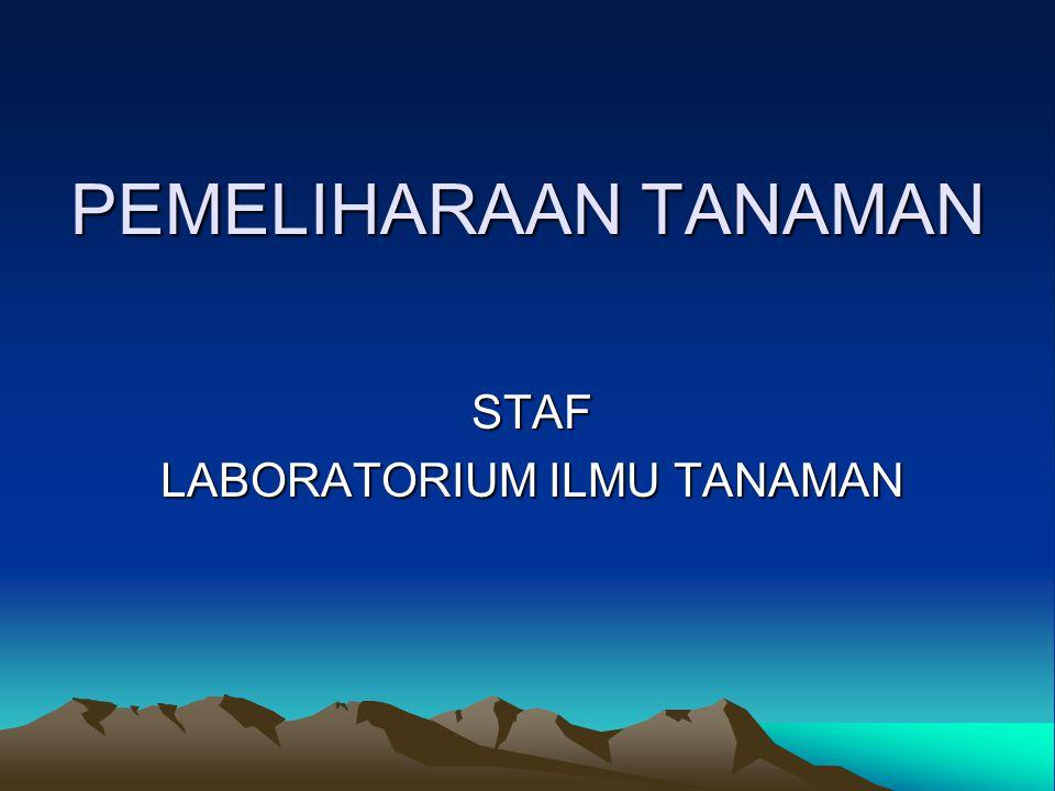 PEMELIHARAAN TANAMAN STAF LABORATORIUM ILMU TANAMAN