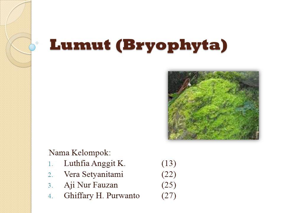 Lumut (Bryophyta) Lumut (Bryophyta) Nama Kelompok: 1. Luthfia Anggit K.(13) 2. Vera Setyanitami(22) 3. Aji Nur Fauzan(25) 4. Ghiffary H. Purwanto(27)