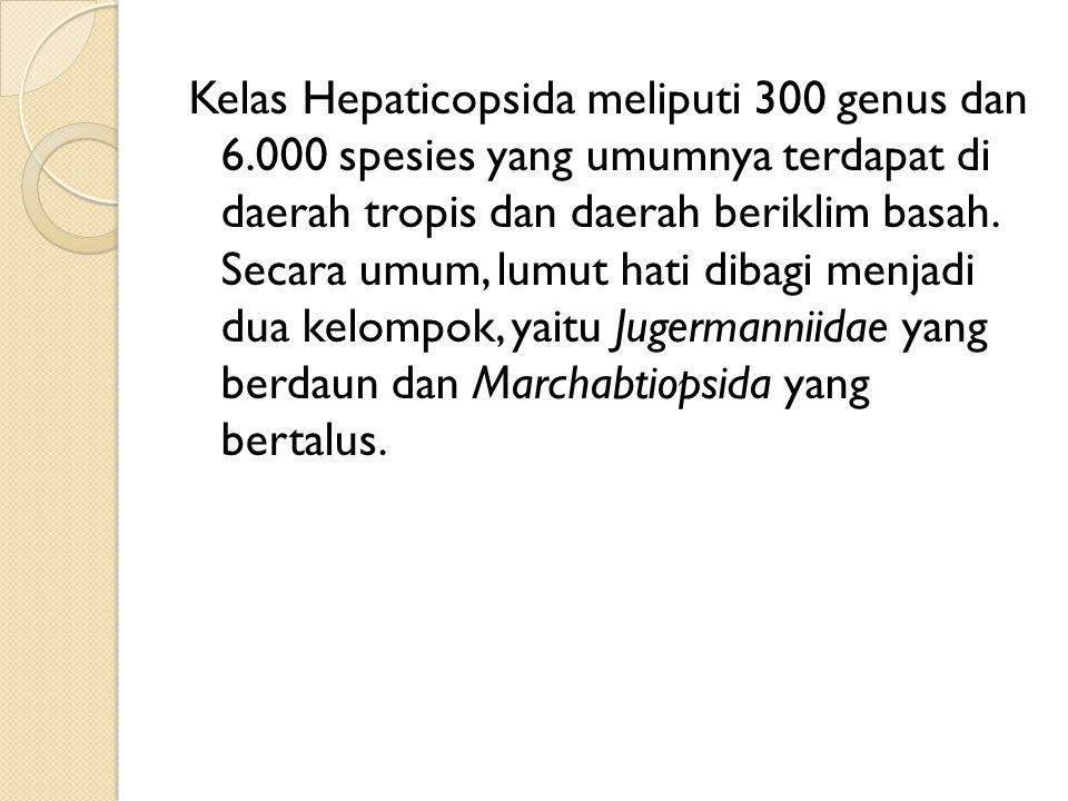 Kelas Hepaticopsida meliputi 300 genus dan 6.000 spesies yang umumnya terdapat di daerah tropis dan daerah beriklim basah. Secara umum, lumut hati dib