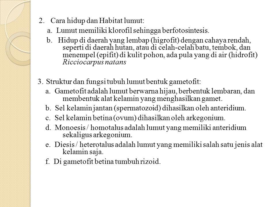 2.Cara hidup dan Habitat lumut: a. Lumut memiliki klorofil sehingga berfotosintesis. b. Hidup di daerah yang lembap (higrofit) dengan cahaya rendah, s