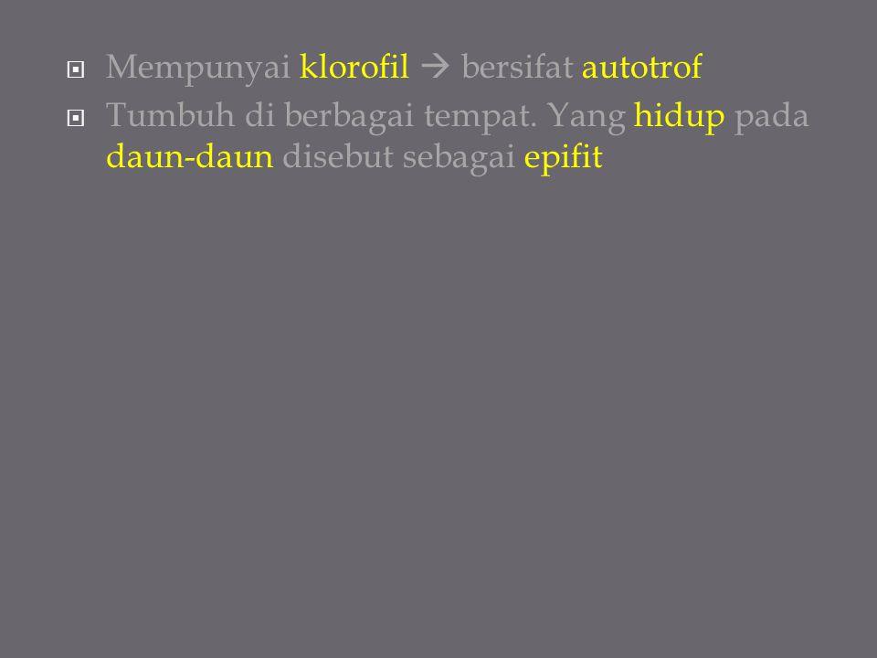  Mempunyai klorofil  bersifat autotrof  Tumbuh di berbagai tempat. Yang hidup pada daun-daun disebut sebagai epifit
