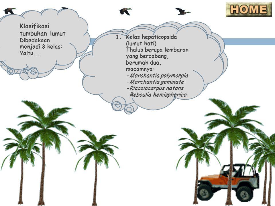 Lumut mengalami dua tahap pergiliran keturunan yaitu: tahap gametofit yang menghasilkan sel kelamin dan tahap sporofit yang menghasilkan spora.