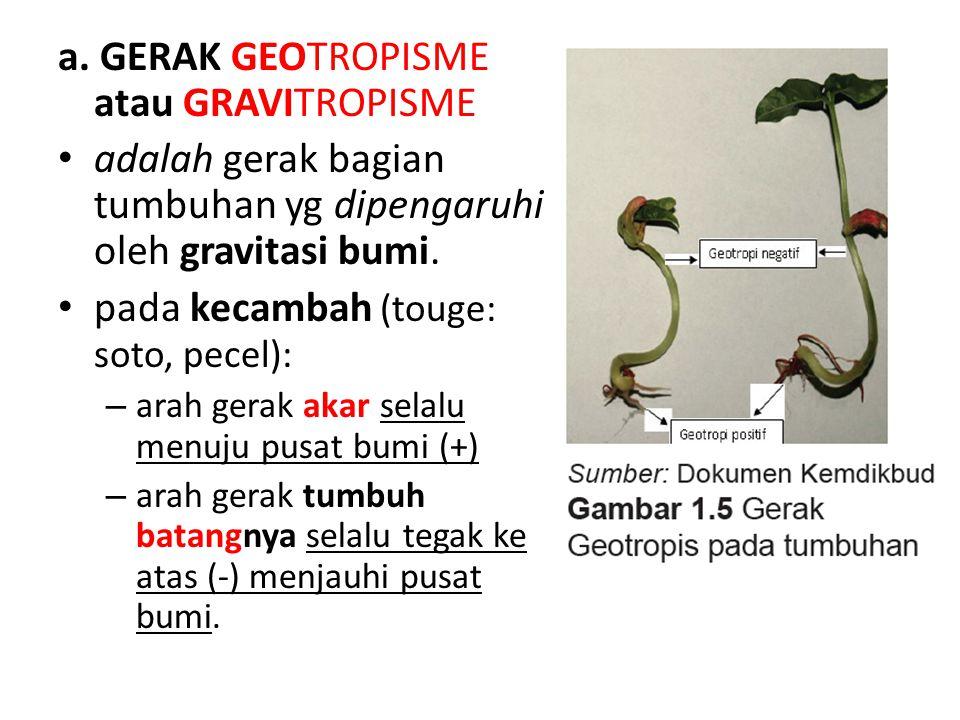 a. GERAK GEOTROPISME atau GRAVITROPISME adalah gerak bagian tumbuhan yg dipengaruhi oleh gravitasi bumi. pada kecambah (touge: soto, pecel): – arah ge