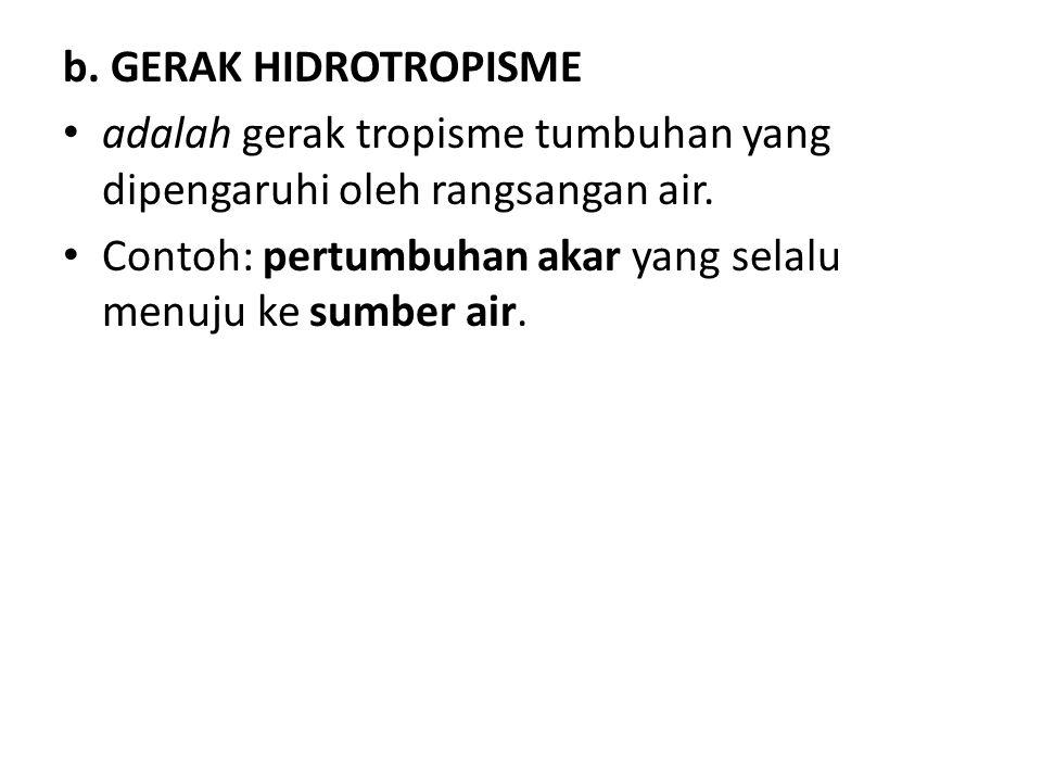 b. GERAK HIDROTROPISME adalah gerak tropisme tumbuhan yang dipengaruhi oleh rangsangan air. Contoh: pertumbuhan akar yang selalu menuju ke sumber air.