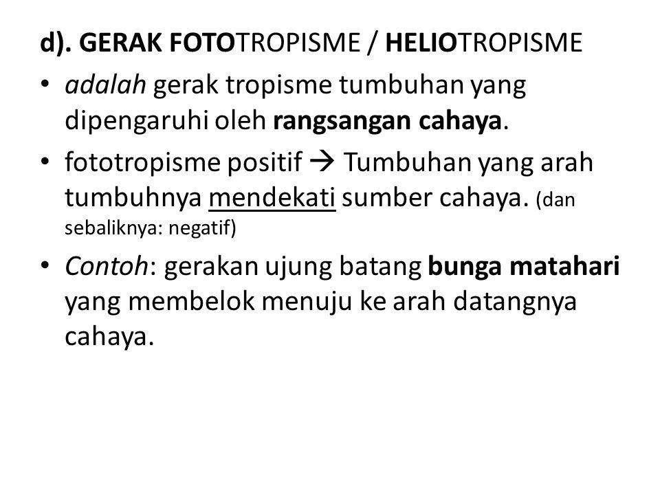 d). GERAK FOTOTROPISME / HELIOTROPISME adalah gerak tropisme tumbuhan yang dipengaruhi oleh rangsangan cahaya. fototropisme positif  Tumbuhan yang ar