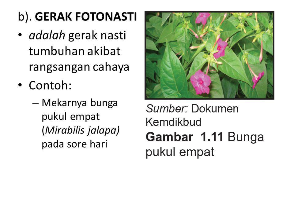 b). GERAK FOTONASTI adalah gerak nasti tumbuhan akibat rangsangan cahaya Contoh: – Mekarnya bunga pukul empat (Mirabilis jalapa) pada sore hari