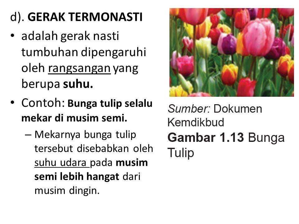 d). GERAK TERMONASTI adalah gerak nasti tumbuhan dipengaruhi oleh rangsangan yang berupa suhu. Contoh: Bunga tulip selalu mekar di musim semi. – Mekar