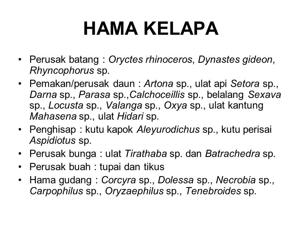 HAMA KELAPA Perusak batang : Oryctes rhinoceros, Dynastes gideon, Rhyncophorus sp.
