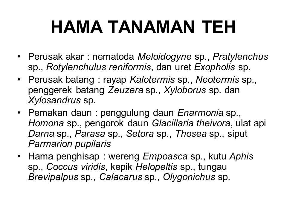 HAMA TANAMAN TEH Perusak akar : nematoda Meloidogyne sp., Pratylenchus sp., Rotylenchulus reniformis, dan uret Exopholis sp.