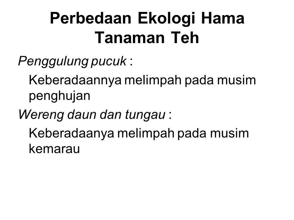 Hama Penting Tanaman Kapas Hama wereng Empoasca sp.