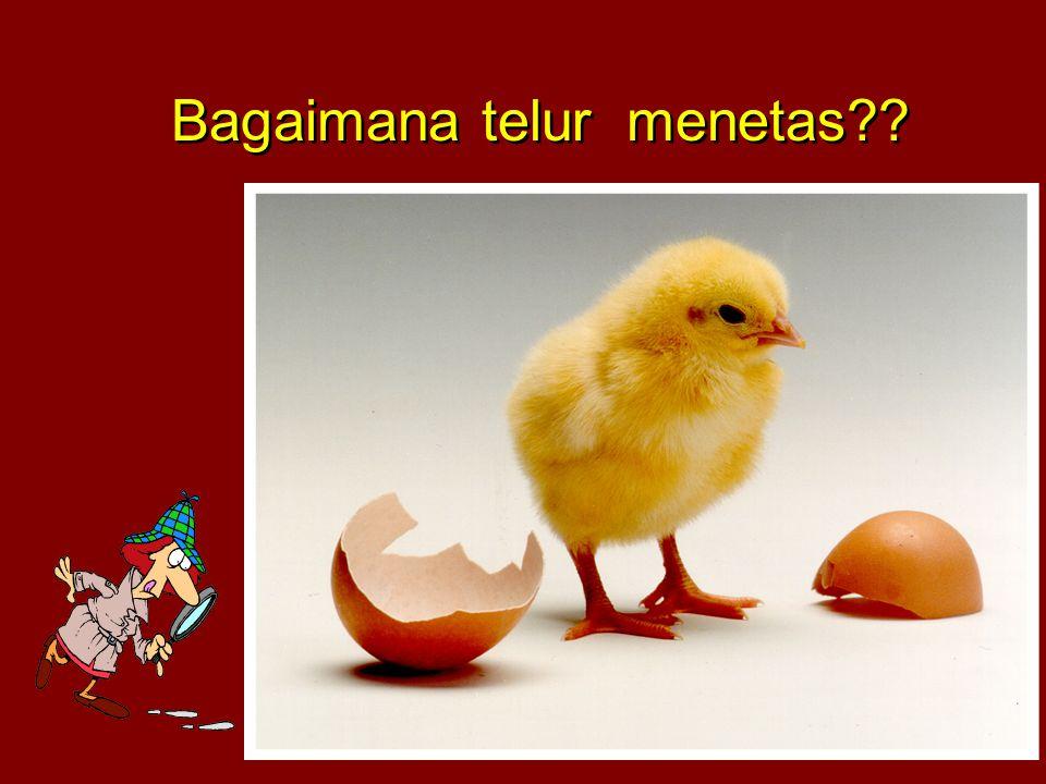 Bagaimana telur menetas??