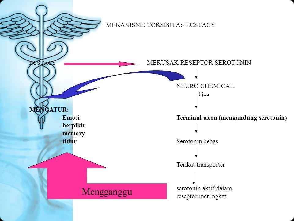 MEKANISME TOKSISITAS ECSTACY ECSTACY MERUSAK RESEPTOR SEROTONIN NEURO CHEMICAL MENGATUR: - EmosiTerminal axon (mengandung serotonin) - berpikir - memo