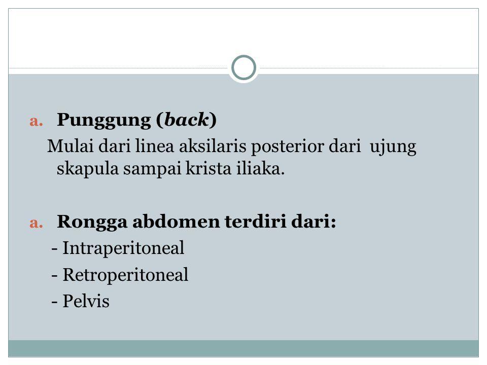 a. Punggung (back) Mulai dari linea aksilaris posterior dari ujung skapula sampai krista iliaka. a. Rongga abdomen terdiri dari: - Intraperitoneal - R