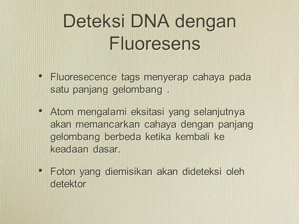Deteksi DNA dengan Fluoresens Fluoresecence tags menyerap cahaya pada satu panjang gelombang. Atom mengalami eksitasi yang selanjutnya akan memancarka