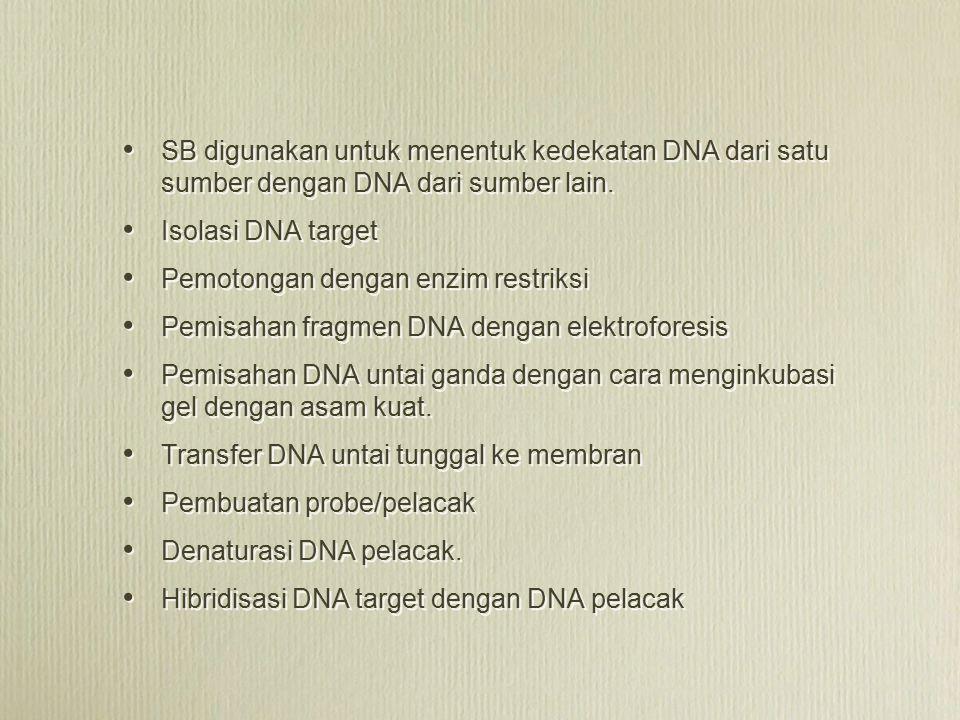 SB digunakan untuk menentuk kedekatan DNA dari satu sumber dengan DNA dari sumber lain. Isolasi DNA target Pemotongan dengan enzim restriksi Pemisahan