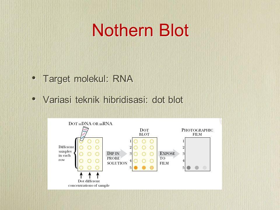 Nothern Blot Target molekul: RNA Variasi teknik hibridisasi: dot blot Target molekul: RNA Variasi teknik hibridisasi: dot blot