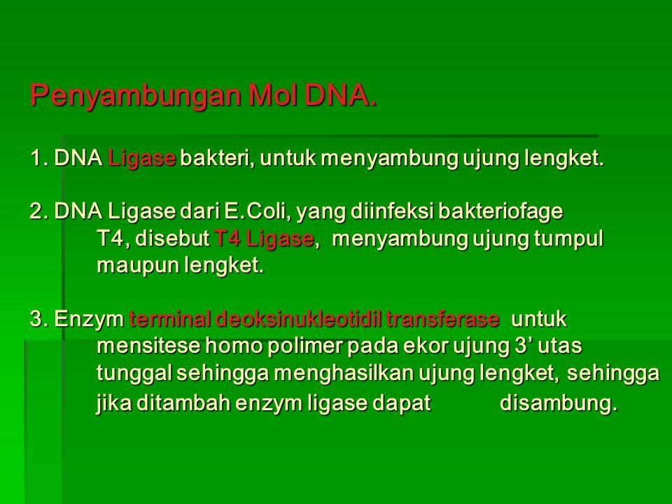 Penyambungan Mol DNA.1. DNA Ligase bakteri, untuk menyambung ujung lengket.