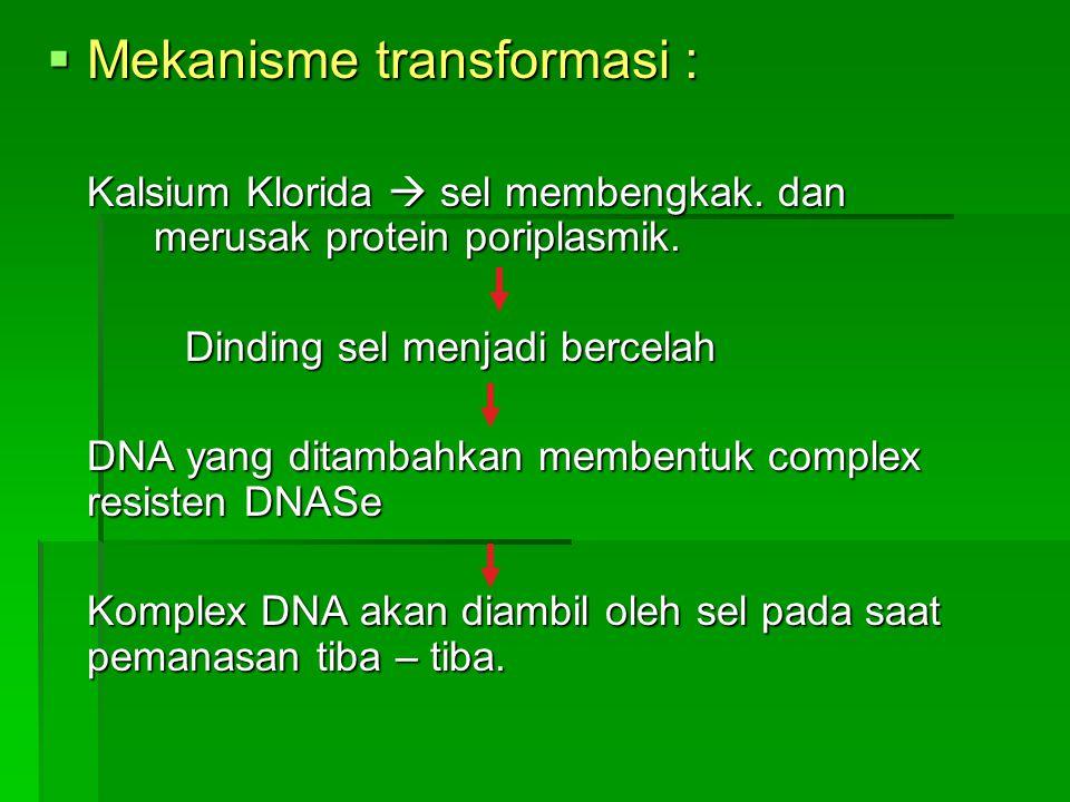  Mekanisme transformasi : Kalsium Klorida  sel membengkak.