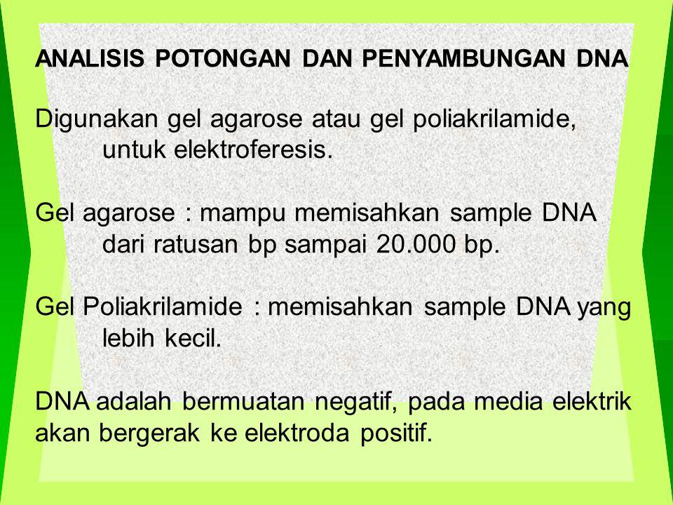 ANALISIS POTONGAN DAN PENYAMBUNGAN DNA Digunakan gel agarose atau gel poliakrilamide, untuk elektroferesis.