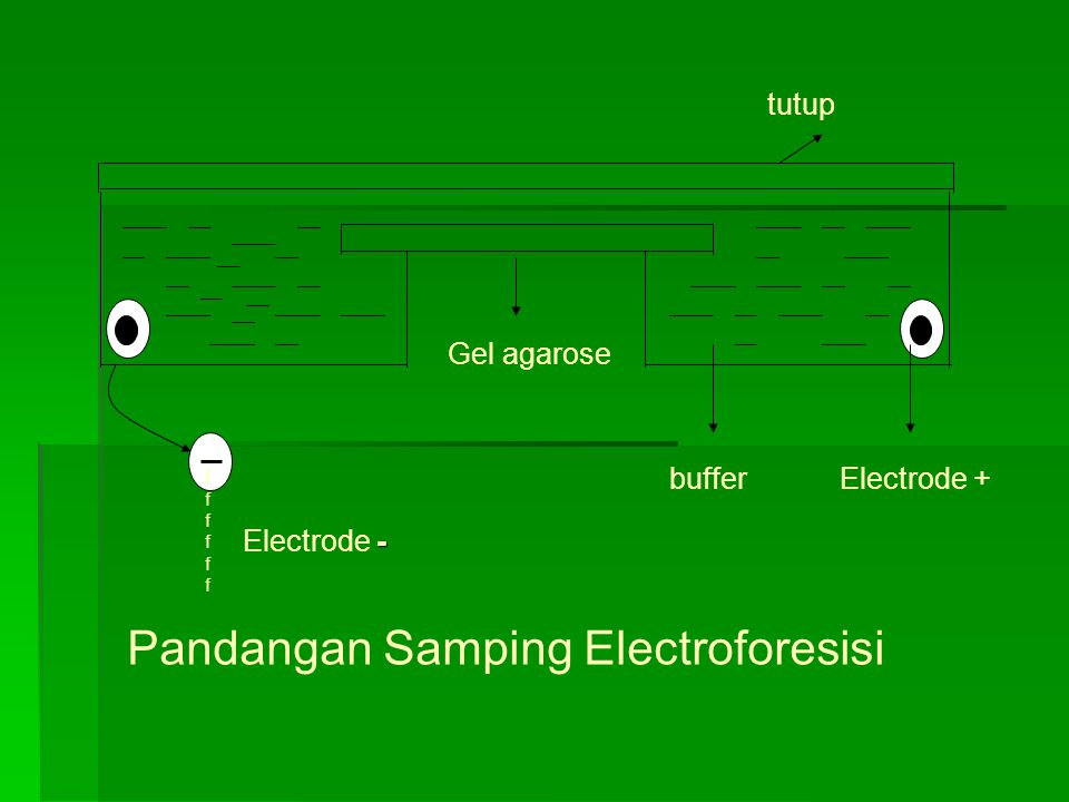 -ffffff-ffffff - Electrode - Electrode + Gel agarose buffer tutup Pandangan Samping Electroforesisi