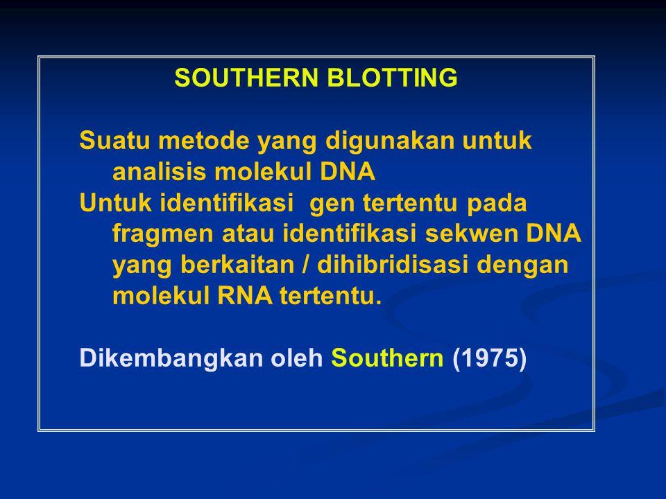 SOUTHERN BLOTTING Suatu metode yang digunakan untuk analisis molekul DNA Untuk identifikasi gen tertentu pada fragmen atau identifikasi sekwen DNA yang berkaitan / dihibridisasi dengan molekul RNA tertentu.