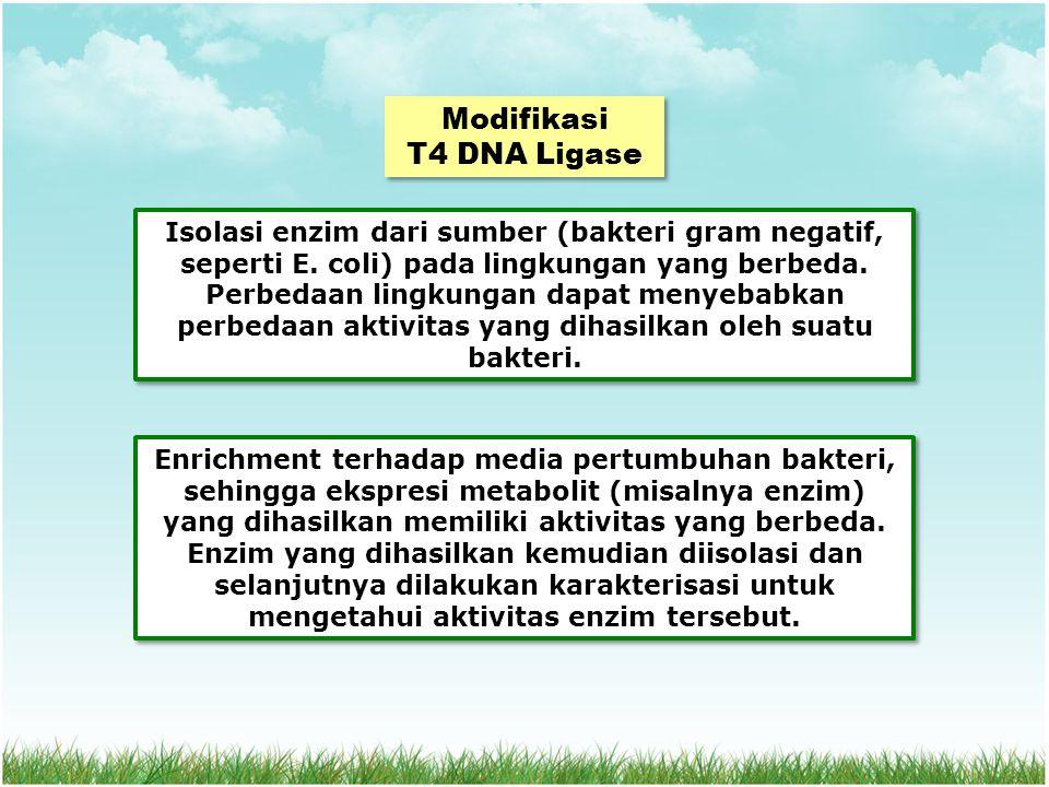Modifikasi T4 DNA Ligase Modifikasi T4 DNA Ligase Isolasi enzim dari sumber (bakteri gram negatif, seperti E.