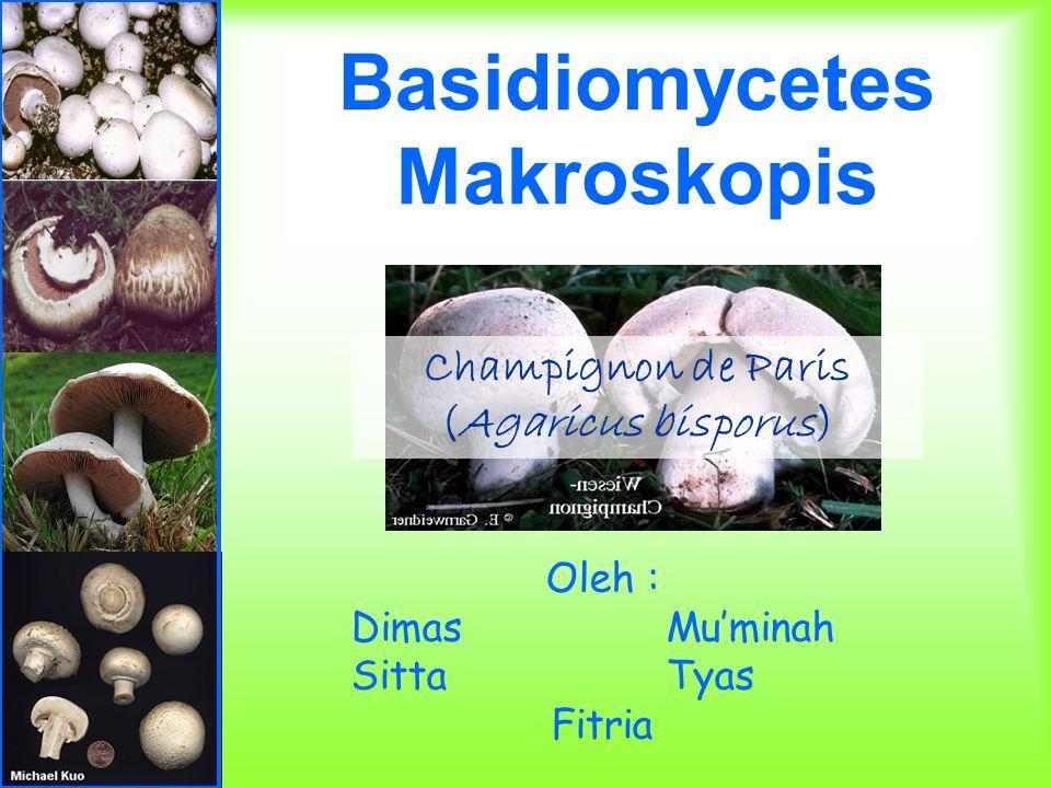 Basidiomycetes Makroskopis Oleh : DimasMu'minah SittaTyas Fitria Champignon de Paris (Agaricus bisporus)
