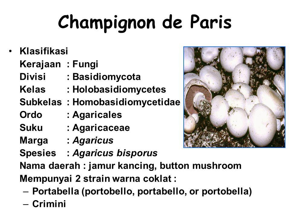 Champignon de Paris Klasifikasi Kerajaan: Fungi Divisi: Basidiomycota Kelas: Holobasidiomycetes Subkelas: Homobasidiomycetidae Ordo: Agaricales Suku: