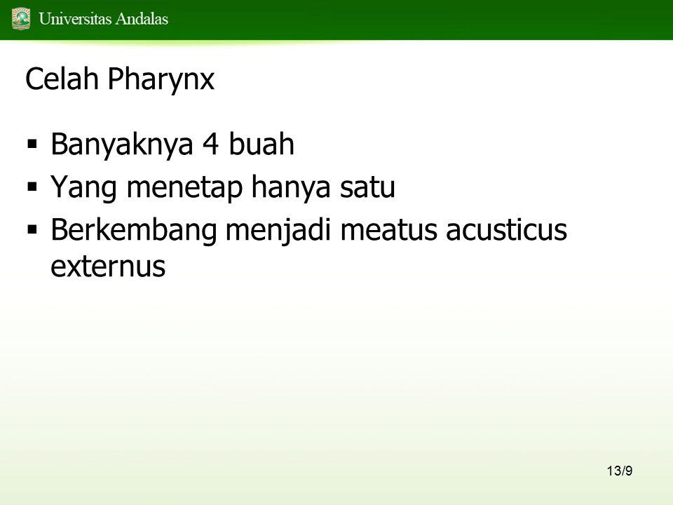 13/9 Celah Pharynx  Banyaknya 4 buah  Yang menetap hanya satu  Berkembang menjadi meatus acusticus externus