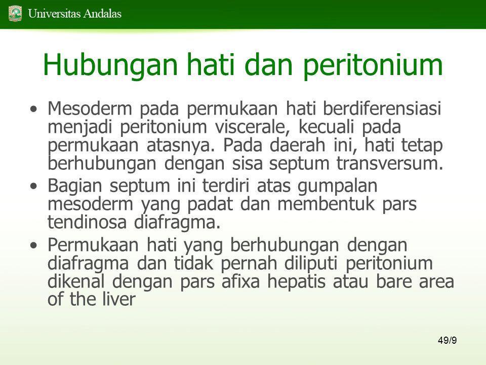 49/9 Hubungan hati dan peritonium Mesoderm pada permukaan hati berdiferensiasi menjadi peritonium viscerale, kecuali pada permukaan atasnya. Pada daer