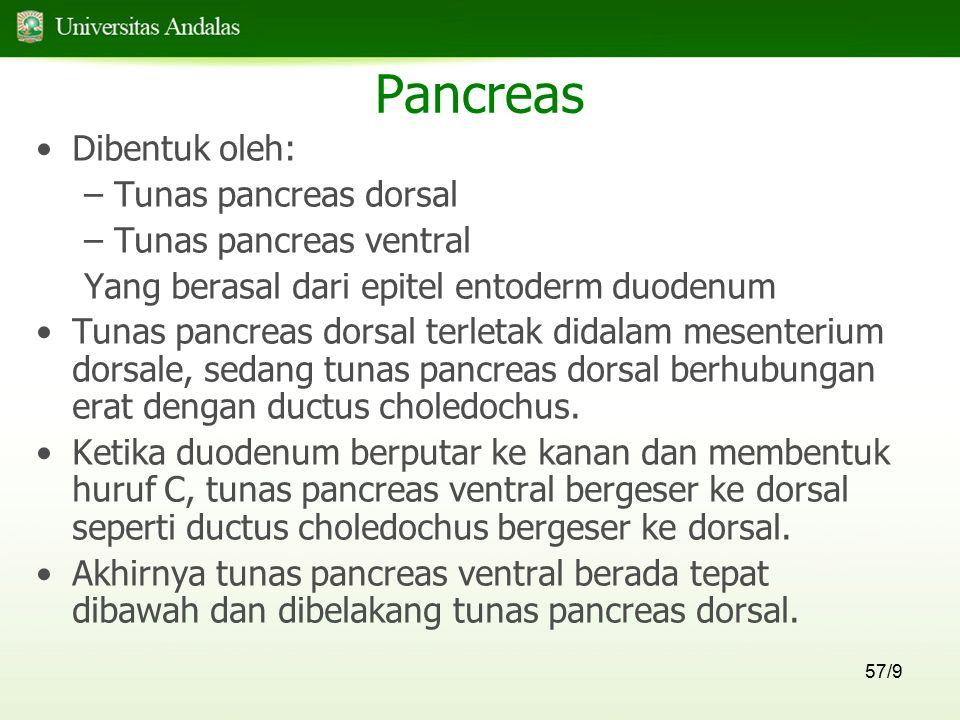 57/9 Pancreas Dibentuk oleh: –Tunas pancreas dorsal –Tunas pancreas ventral Yang berasal dari epitel entoderm duodenum Tunas pancreas dorsal terletak