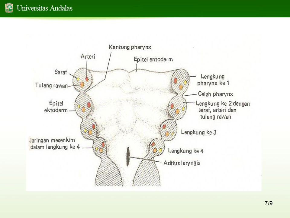 18/9 Tongue – tie = ankyloglossia Lidah tidak bebas dari mulut Penyebab : tidak terjadi degenerasi sel pada dasar mulut, sehingga lidah terikat pada dasar mulut Dalam keadaan normal, terjadi degenerasi sel yang luas, yang tersisa hanya : FRENULUM