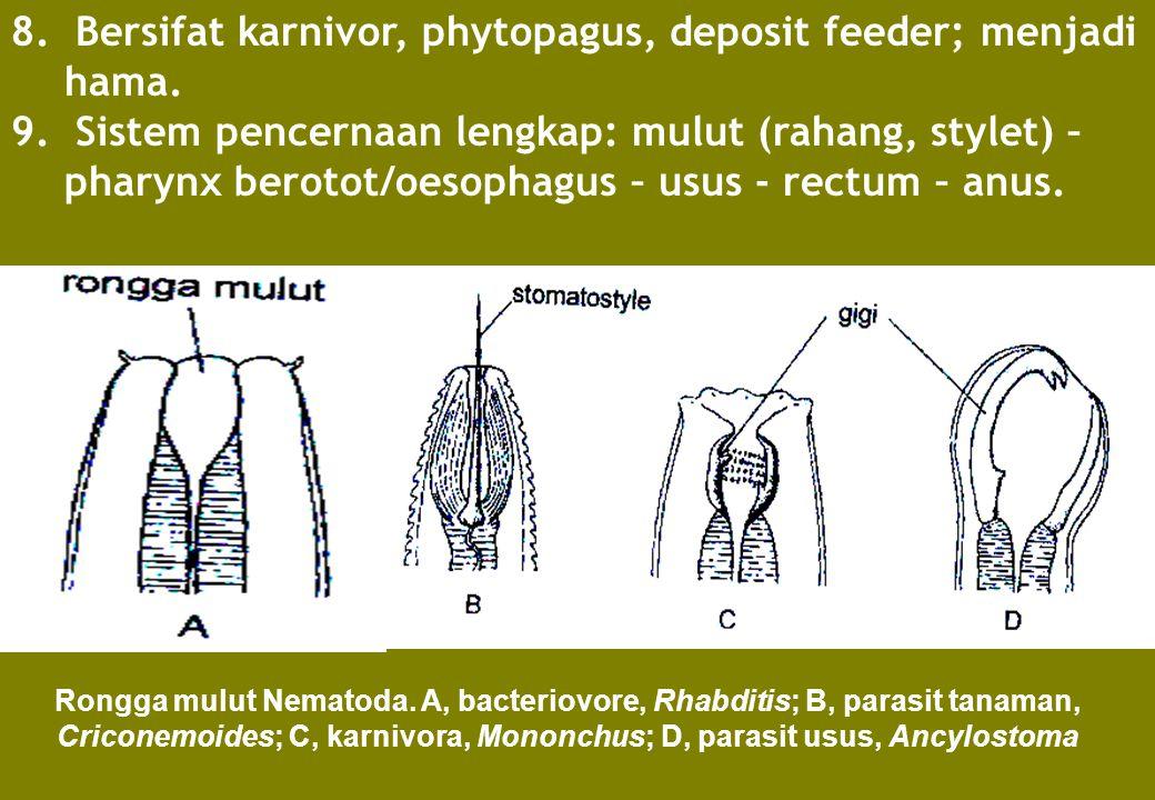 8. Bersifat karnivor, phytopagus, deposit feeder; menjadi hama. 9. Sistem pencernaan lengkap: mulut (rahang, stylet) – pharynx berotot/oesophagus – us